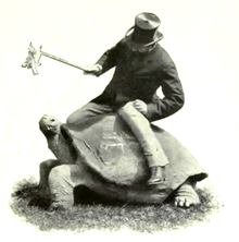 Black and white photograph of Walter Rothschild straddling an adult Galápagos tortoise. Rothschild is a Victorian gentleman sporting a beard and top hat.