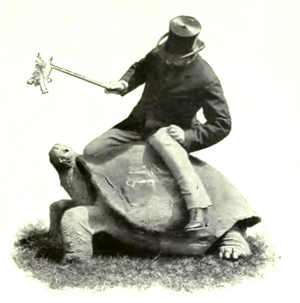 Walter Rothschild, 2nd Baron Rothschild - Lord Rothschild on a giant tortoise