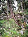 Ruïnes de Kuelap cobertes de vegetació02.jpg
