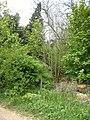 Ruins of Langley Hall - geograph.org.uk - 426493.jpg