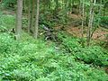 Ruisseau (10).jpg