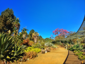Ruth Bancroft Garden - Image: Ruth Bancroft Garden