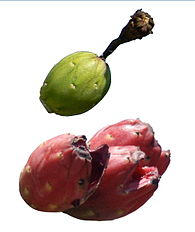 Saguaro fruit.jpg