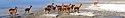 Salar de Surire banner.jpg