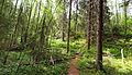 Sallaajärvi nature trail.jpg
