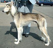 wasserhunde im tierschutz