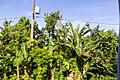 Samaná Province, Dominican Republic - panoramio (29).jpg
