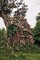 Sambor Prei Kuk N18.jpg