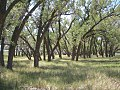Sand Creek Massacre National Historic Site, Eads, Colorado 01.jpg