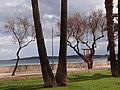 Sant Llorenç des Cardassar, Balearic Islands, Spain - panoramio (12).jpg
