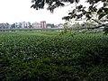 Santragachi Lake at Santragachi, Howrah district 11.jpg