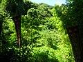 Sasuke-Inari-Shrine-HiddenVillageSite.JPG