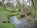 Seale Stream near Selborne - geograph.org.uk - 1802791.jpg