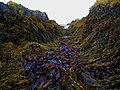 Seaweed Valley - geograph.org.uk - 597981.jpg