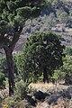 Sequoia (1).jpg