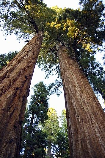 Sequoia National Park 04.jpg