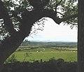 Sheep grazing below Llechcynfarwy churchyard - geograph.org.uk - 994292.jpg