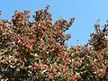 Shrubs with red berries.jpg