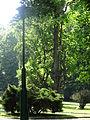 Siary zespół pałacowo-parkowy park nr A-201 (46).JPG