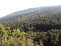 SierraMadrona Autumn LaTorecilla.jpg