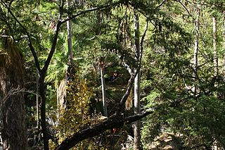 Sierra de la Laguna pine–oak forests Ecoregion in Mexico