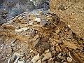 Silvercreek Wash - panoramio - Zzyzx (6).jpg