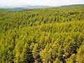 Skiritida forest.jpg