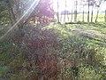 Slatiny - panoramio (8).jpg