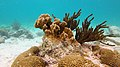 Snorkeling At Webers Joy, Bonaire (16363610232).jpg