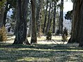 Some of the trees at George Washington Birthplace National Monument. - panoramio.jpg