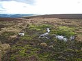 Sphagnum moss and moorland above Thornhope House - geograph.org.uk - 348917.jpg
