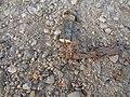 Spider in Wieniec (2).jpg