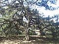 Spil Dağı Milli Parkı - 13.jpg
