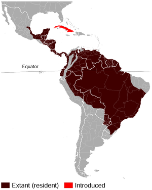 Lowland paca - Image: Spotted (Lowland) paca Cuniculus paca distribution map
