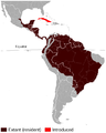 Spotted (Lowland) paca Cuniculus paca distribution map.png