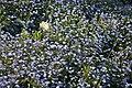 Spring in London (7173061678).jpg