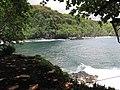 Starr-090623-1499-Terminalia catappa-habit view ocean-Nahiku-Maui (24966678555).jpg