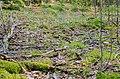 Stensättning Hedemora 323-3.jpg