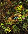 Still Life with Robin's Nest by Fidelia Bridges.jpg