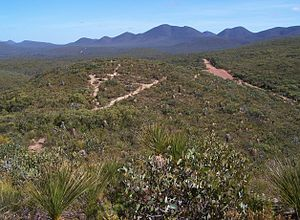Stirling range heath 01 gnangarra (rotated).jpg