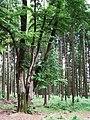 Stoki Kaliště w Lipnie nV 01.jpg