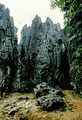 Stone forest 1983-28.jpg