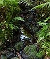 Stream in Gullmarsskogen ravine.jpg