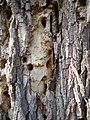 Strom a diry po tesarikovi v Lednici.JPG