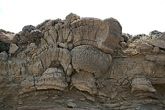 Geobiology - Stromatolites in the Green River Shale, Wyoming, USA, dating to the Eocene