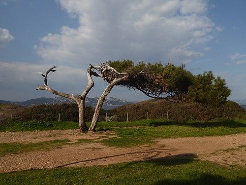 Sturmerprobter Baum.jpg