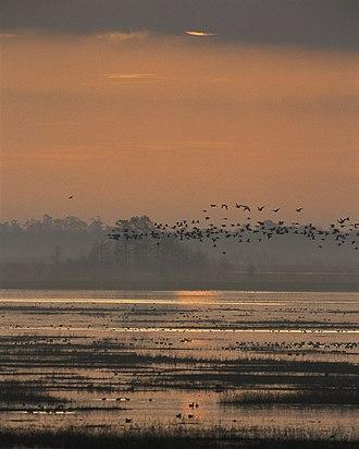 Lacassine National Wildlife Refuge - Sunset on the marsh at Lacassine National Wildlife Refuge