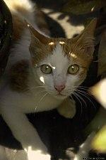 Cat communication - Wikipedia