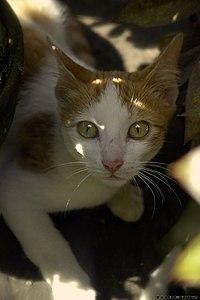 تعبير القطط مشاعرهم مرفق بالصور 200px-Surprised_cat.