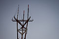 Sutro Tower — San Francisco (7105216793).jpg